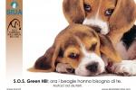 fai-un-gesto-damore_adotta-un-beagle-di-green-hill_rif-5