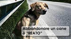 ABBANDONARE UNA CANE E REATO